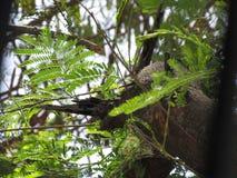 greenery Imagem de Stock
