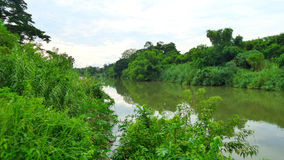 Greenery along Pasak River Royalty Free Stock Photos