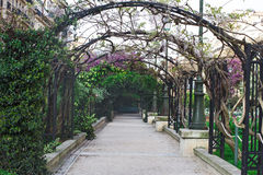 Greenery arch in the city garden Stock Photos