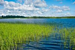 Greenery around the lake Stock Photography