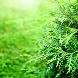 Greenery Background Royalty Free Stock Photography