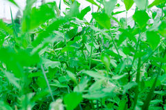 Greenery Stock Photos