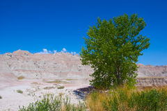 Greenery in the Badlands Royalty Free Stock Photography