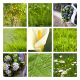 Greenery collage Stock Images