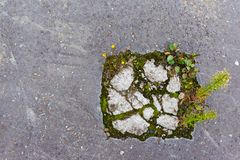Greenery on concrete. Flowers and grass breaking through concrete royalty free stock photos