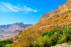 The greenery in desert Royalty Free Stock Photo