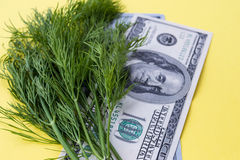 Greenery dill and 100 dollars on yellow background Royalty Free Stock Photos