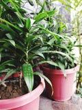 greenery fotografía de archivo libre de regalías