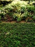 greenery imágenes de archivo libres de regalías