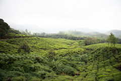Greenery in Eravikulam National Park Stock Photos