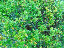 Greenery. Generic green foliage images in summer royalty free stock images