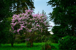Greenery in Georgia, Batumi Botanical Garden Stock Photos