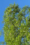 Greenery Stock Image