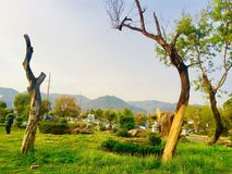 Greenery of without green trees. Trees greenery in beautiful green city Islamabad Pakistan, season changing effects spring and summer, natural scenery of natural Royalty Free Stock Photography