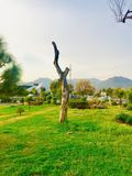 Greenery of without green trees. Trees greenery in beautiful green city Islamabad Pakistan, season changing effects spring and summer, natural scenery of natural Stock Photos