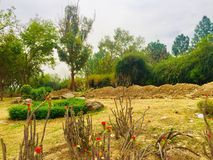 Greenery of green trees. Trees greenery in beautiful green city Islamabad Pakistan, season changing effects spring and summer, natural scenery of natural beauty Stock Photo