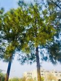 Greenery of green trees. Trees greenery in beautiful green city Islamabad Pakistan, season changing effects spring and summer, natural scenery of natural beauty Royalty Free Stock Images