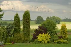 Greenery. Landscape in countryside garden stock photography