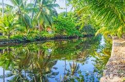 The greenery at Hamilton`s Canal, Sri Lanka. The lush tropic forest along the banks of Hamilton`s Canal between Colombo and Negombo, Wattala suburb, Sri Lanka Royalty Free Stock Photography