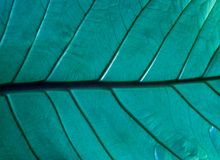 Greenery leaf in forest.Nature background royalty free stock photo