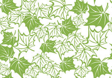 Greenery maple leaf seamless pattern background Stock Photos
