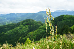 Greenery mountain panorama and town view with closeup grass flow. Er, Takachiho, Japan Royalty Free Stock Images
