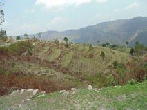 Greenery. Mountains of uttrakhand Stock Photos