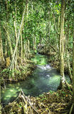 Greenery nature  forest of Krabi, Thailand Royalty Free Stock Photos
