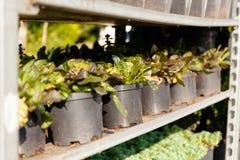 Greenery ogr?du i krajobrazu dekoracji ogrodniczy ziele sprzeda? obraz stock