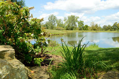 Greenery. Outdoor picture of a pond with greenery royalty free stock image