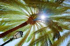 Greenery in Palma de Mallorca Stock Photos