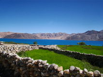 Greenery on pangong lake bank royalty free stock photo