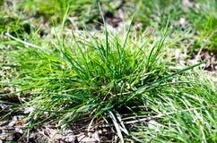 Greenery papierosowy krupon i miasto Karcz pod traw? Bush trawa Zielona trawa Ekologia miasto niebezpiecze?stwo zdjęcia stock