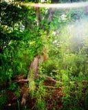 greenery immagine stock libera da diritti