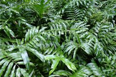 Greenery plant. Topview green plant background Royalty Free Stock Photo