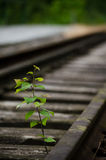Greenery by rails Stock Photos