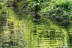 Greenery is reflected in water Stock Image