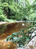 Greenery and river at the gardens in the parish of Cawdor in Nairnshire, Scotland. Flowing river at the gardens in the parish of Cawdor in Nairnshire, Scotland stock images