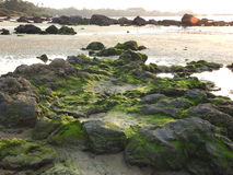 Greenery on Rocks, Redi beach stock photography