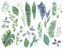 Greenery set of exotic watercolor green tropical leaves Stock Photography