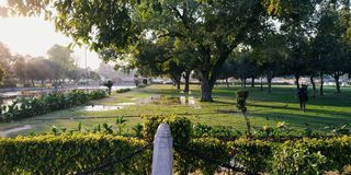Greenery. With sun shine royalty free stock photography