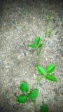Greenery tapety liść Zdjęcia Royalty Free