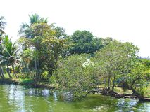 Greenery - Trees at Shore of Backwaters stock image