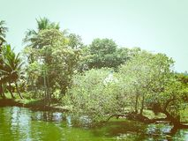 Greenery - Trees at Shore of Backwaters Royalty Free Stock Images