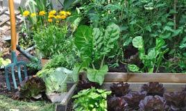 Greenery vegetable garden Stock Photography