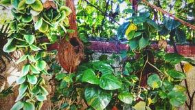 Greenery zasadza liść naturę Zdjęcia Stock
