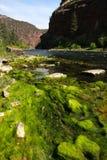 Greenet River i Utah royaltyfri foto
