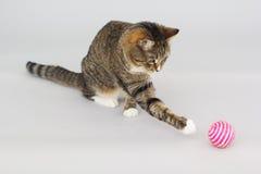 Greeneyed katt för strimmig katt som spelar med leksaken Royaltyfri Bild