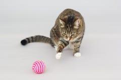 Greeneyed katt för strimmig katt som spelar med leksaken på grå färger Royaltyfri Bild