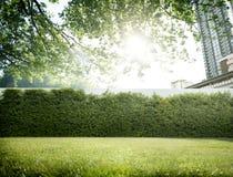 Greenfield środowiska zieleni ogródu pejzażu miejskiego pojęcie zdjęcia stock